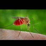 Обработка от комаров, Новосибирск