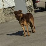 Пропал пёс!, Новосибирск