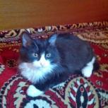 Красивый кот 6 мес., Новосибирск