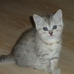 месячные котята, Новосибирск