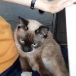 Ищем хозяев для кота - старых или новых, Новосибирск