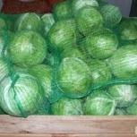 Продам капусту оптом, Новосибирск