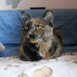 Тетя Мотя-молодая красивая кошка, Новосибирск