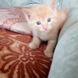 Шустрый котенок Персик, Новосибирск