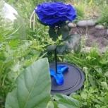 Продам стабилизированные живые цветы, Новосибирск
