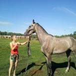 Продам лошадь в сузунском районе., Новосибирск