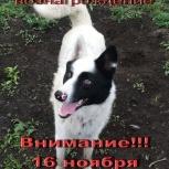 пропала собака метис хаски с лайкой, Новосибирск