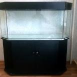 Продам аквариум 250л, Новосибирск