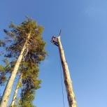 Обрезка деревьев, Новосибирск