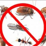 Уничтожение насекомых.уничтожение клопов.тараканов,клещей,комаров, Новосибирск