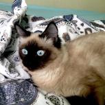 Отдам котёнка в хорошие руки, Новосибирск