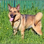 Красивая собака Джулия, Новосибирск