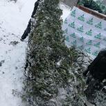 Элитные ёлочки в новосибирске без предоплаты, Новосибирск
