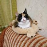 Кошка ищет дом, Новосибирск