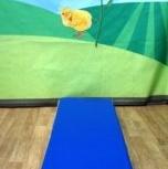 Продам гимнастический мат 1,5х0,5х0,1м сине-жёлтый, Новосибирск