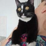 Стильный котенок Кевин заботливому хозяину, Новосибирск