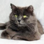 Шикарная кошка Линда ищет новых хозяев., Новосибирск