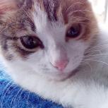 Три котёнка в одном - это Эля, будущая  мышеловка, Новосибирск