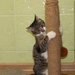 Кошка Симона, 6 месяцев в поисках семьи, Новосибирск