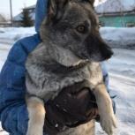 Собака Мега ищет дом, Новосибирск
