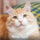 Принц Гарри, 1 год, Новосибирск