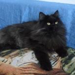 Королева Харли кошка, Новосибирск