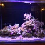 Действующий морской аквариум с кораллами 120 л, Новосибирск