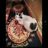 Потерян кот, Новосибирск
