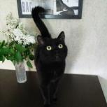 Черный кот Кокос в поисках дома, Новосибирск