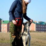 Дрессировка собак, Новосибирск