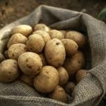 Молодой картофель, Новосибирск