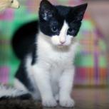 Бело-чёрный котёнок-девочка Милла, 2 мес, Новосибирск