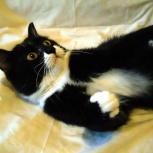 Очаровательный кот франт Вилли, Новосибирск