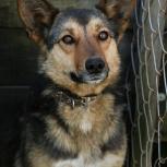 Ищет дом и любящих хозяев очаровательная собаке Рокси!, Новосибирск
