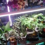 Лампы, светильники, прожекторы для растений, Новосибирск