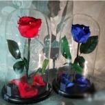 Синяя роза в колбе, Новосибирск