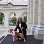 Дрессировка собак, хендлинг, фризби,аджилити, Новосибирск