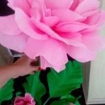 Продам гигантские цветы, Новосибирск