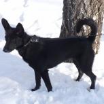 Собачка Динка-пружинка ищет дом, Новосибирск