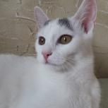Котята ищут дом., Новосибирск