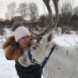 Прогулка, катание на Оленях в Новосибирске, Новосибирск