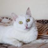 Кошачья принцесса Аврора ищет дом, Новосибирск