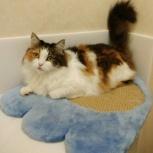 Потерялась трехцветная кошка Лизочка 9 лет, Новосибирск