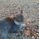 Чудесный котик в добрые руки, Новосибирск