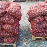 Картофель оптом и в розницу с доставкой, Новосибирск