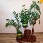 Продам подставки под цветы. Академгородок, Новосибирск