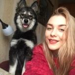 Отдам собачку в добрые руки из-за семейных обстоятельств, Новосибирск