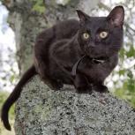 Потерялся черный кот, Новосибирск