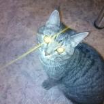 Найден кот на затулинке, Новосибирск