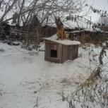 Отдам в добрые руки! собаку, Новосибирск